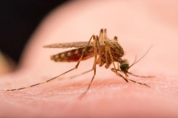 Scacciare zanzare